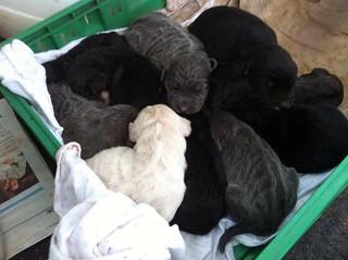 cuccioli abbandonati (2)
