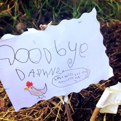 RIP Daphne the Chicken