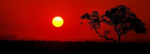 africa sunset wild sky tree silhouette solitude alone wildlife safari lonely zambia