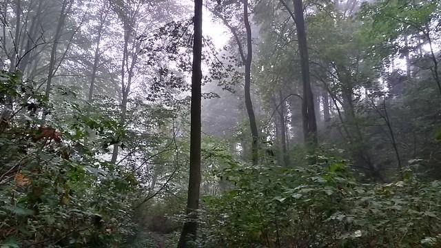 Forgotten Creek Natural Area