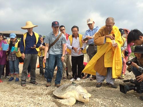 瀕臨絕種的保育類海龜野放工作。(圖片來源:海生館)