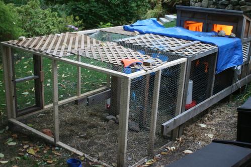 chicken coop IMG_9952