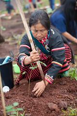 Soneva Forest Restoration Project, Chiang Mai 03