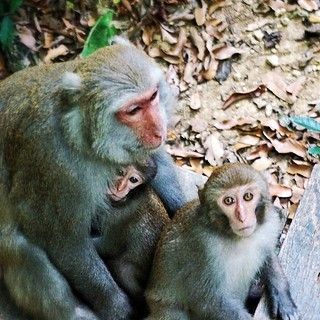 Macaques having family time at Shoushan Nature Park. #Taiwan #Kaohsiung