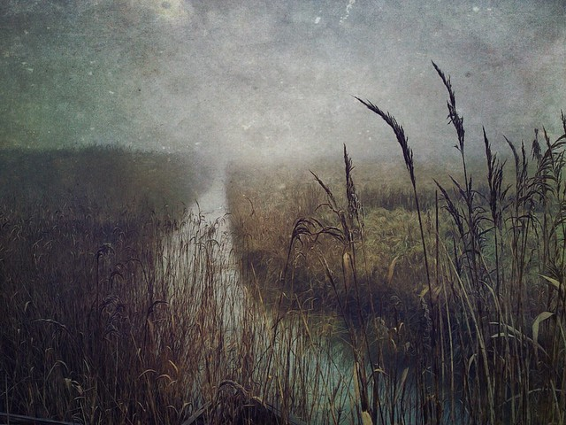 Sarah Jarrett - Out on the marshes