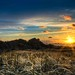 Grasslands of Home by shontz photography