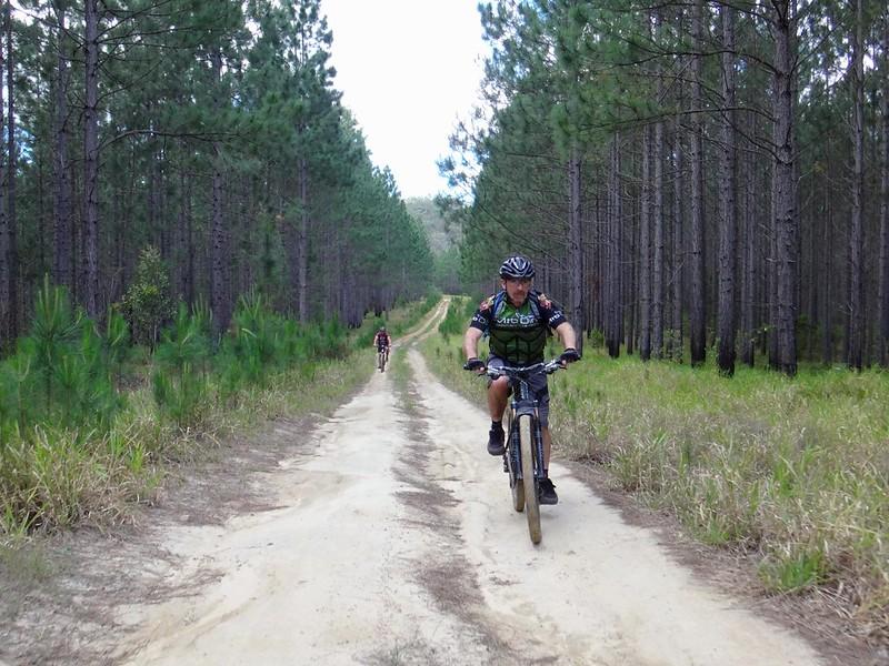 Pine Plantation, Beerburrum