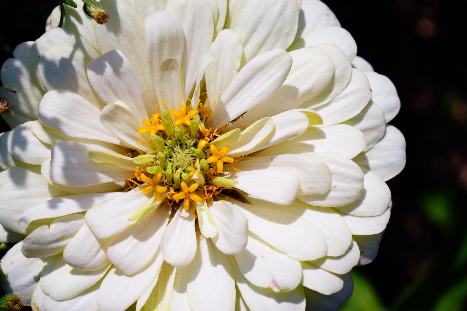 十月【休耕田園。花】