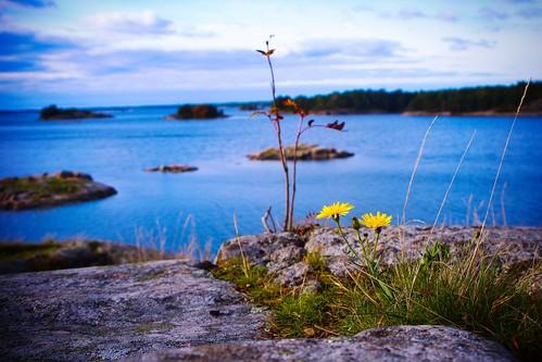 flower islands archipelago