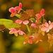 Fall Hydrangea by J Henry G