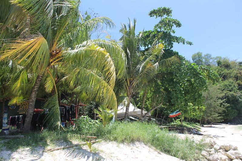 sabah palm trees