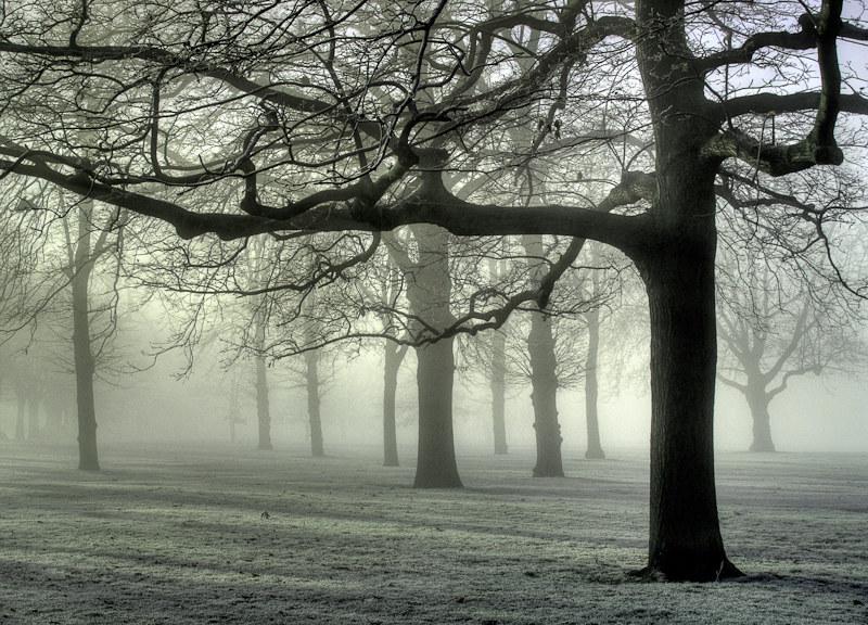 3670 Greenwich Park Fog