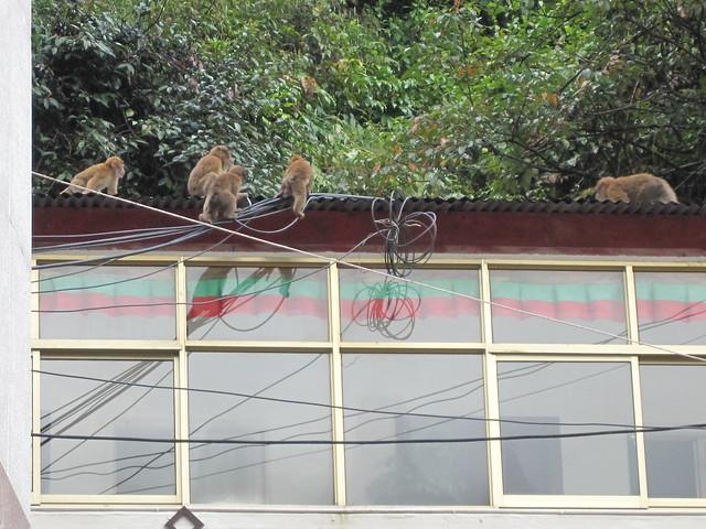 Wire Monkey