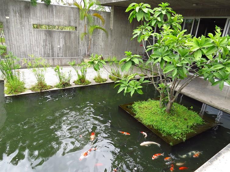 勝洋水草餐廳 (3)