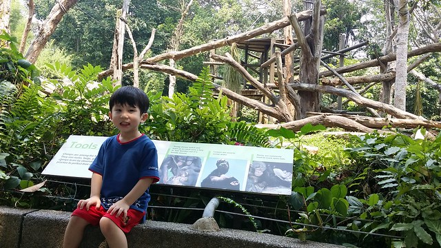 Sitting and posing with the chimps