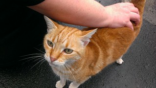 Orange kitty at UTS