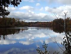 The Pond 2014