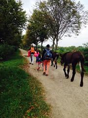 Passeggiata del 25 ottobre a Rho verso il Fontanile Serbelloni