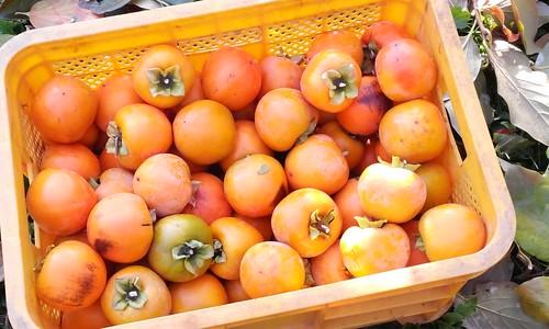 감나무 농장 | 광정