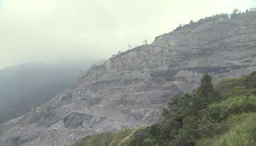 台灣水青岡面臨採礦威脅