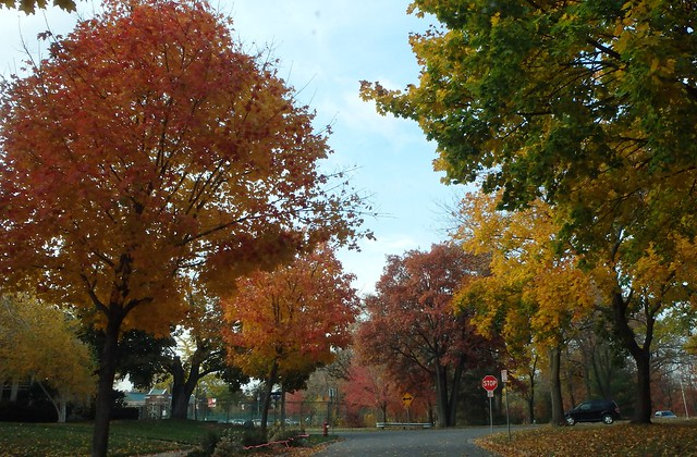 red, orange, brown, yellow, green trees surrounding a street