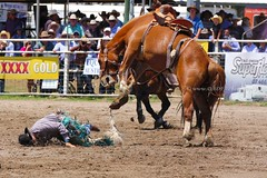 animal sports, rodeo, western riding, chilean rodeo, event, equestrian sport, sports, charreada, reining,