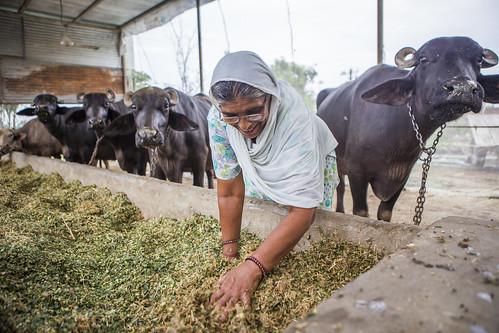 Climate Smart Villages- Karnal