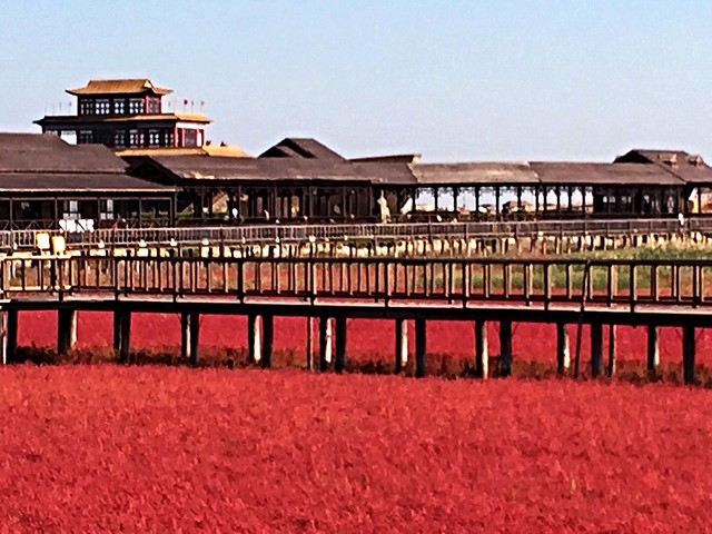 This is an unique Red Seabeach in Panjin!!
