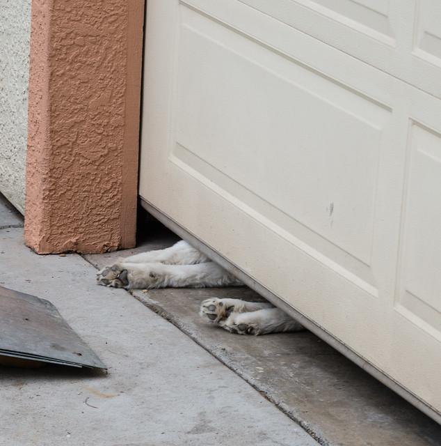 Garaged Dog