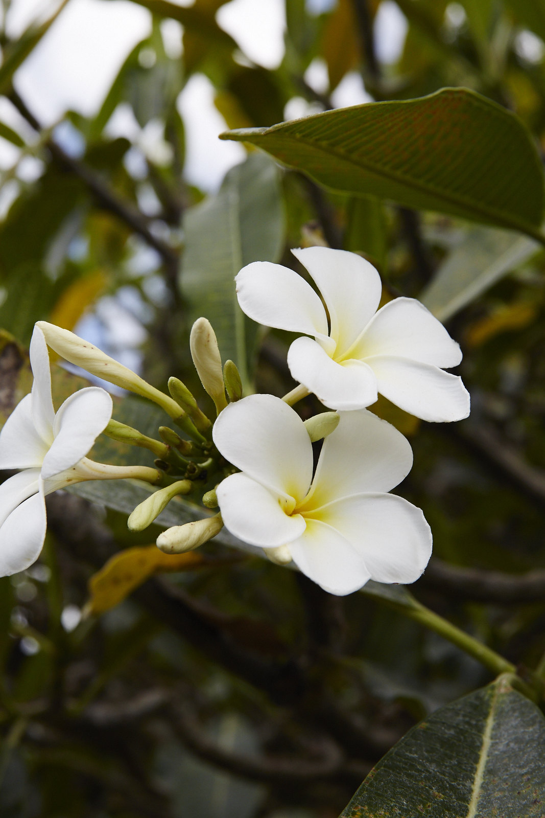 Hawaii_0721