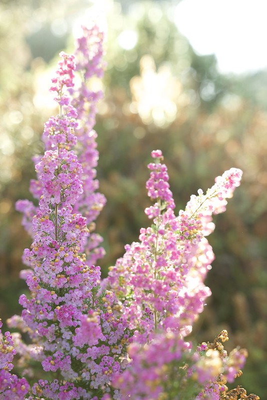 © Amie Whiting_2014_Winter Morning Heather Garden_06