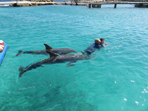 Antrieb mit 2 Delphinstärken