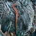 Small photo of Alligator Lizard