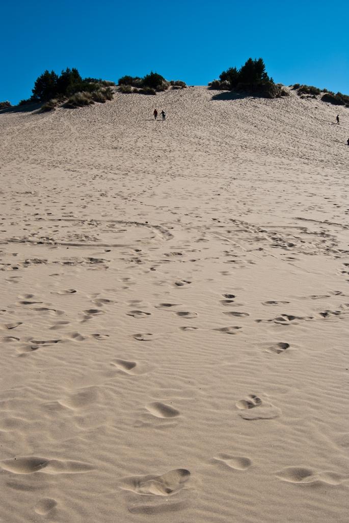 Sand Dunes at Honeyman State Park