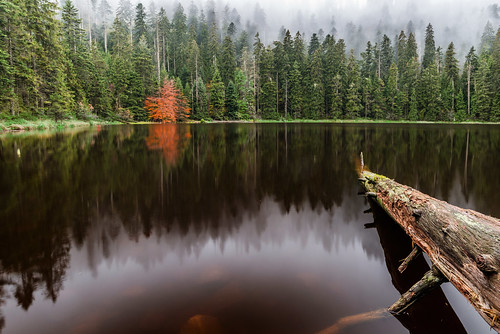 Herbst am Wildsee