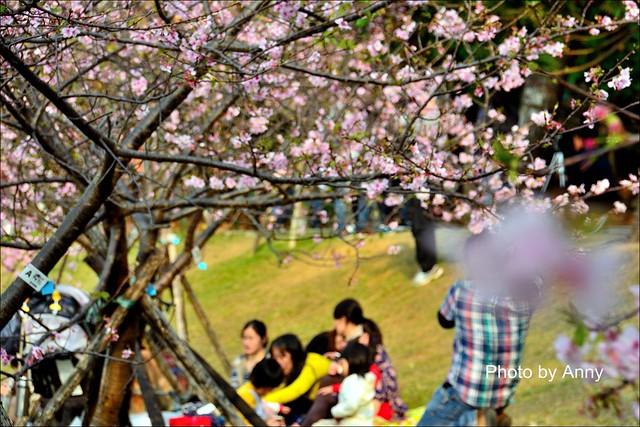 麗池櫻花21