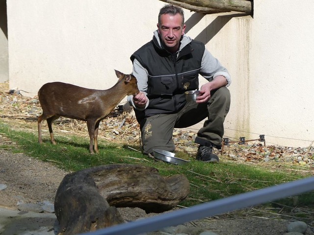 Muntja, Zoo Mulhouse