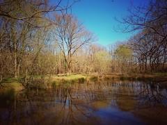 Autre vision du même paysage #landscape #nature #spring - Photo of Vacquiers
