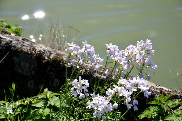 Bouquet de lumière au bord de l'eau