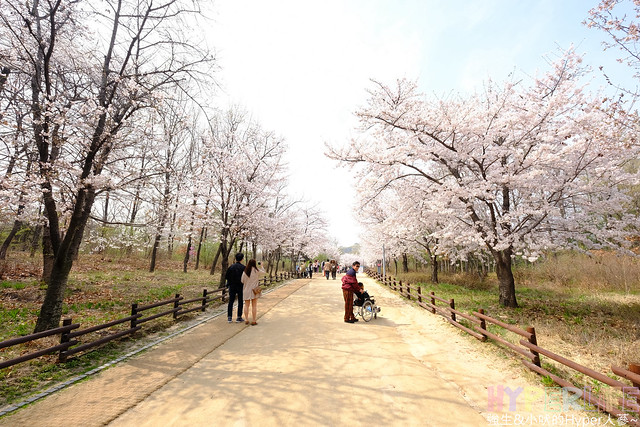 首爾林seoul forest (32)