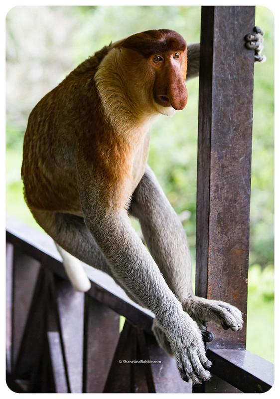 Borneo-20170413-IMG_8108