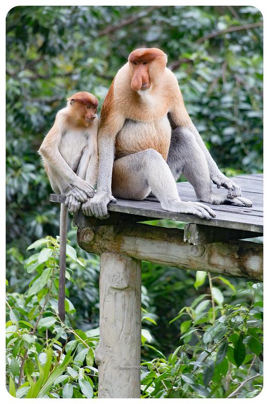 Borneo-20170413-_MG_8061