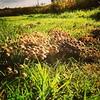 Een Vinex paddenstoelenwijk