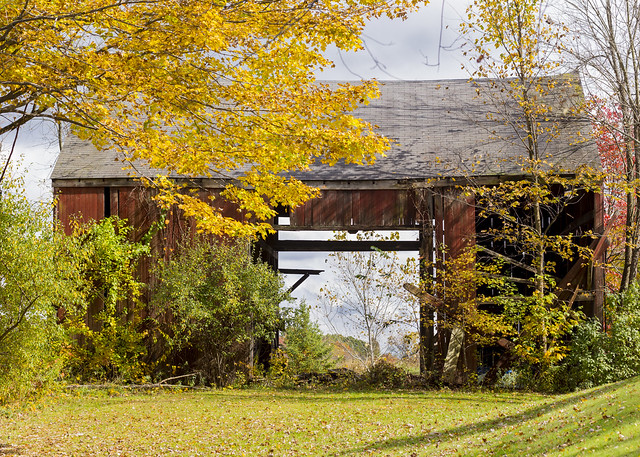 Barn and Leaves