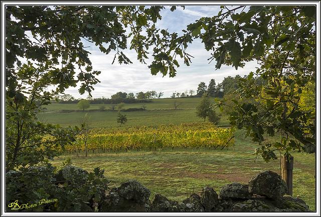 Lever de Soleil sur les Vignes 03