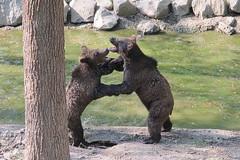 Jund Bären im Wildpark