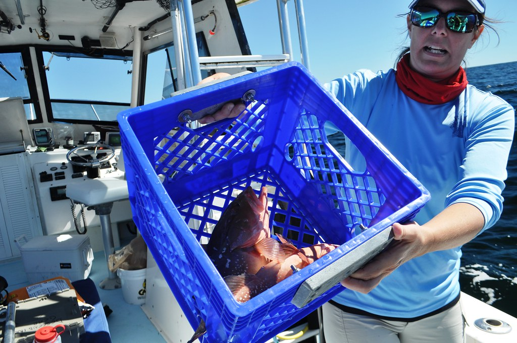 Florida Sea Grant Extension Agent Joy Hazell Demonstrates How a Weighted Milk Crate Can Be Used as a Descending Device to Return Red Grouper to the Water.