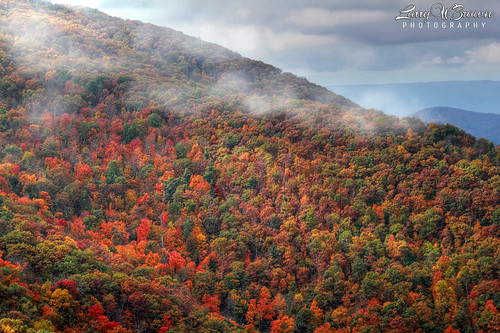 autumn fall virginia fallcolors fallfoliage shenandoahnationalpark hawksbillmountain