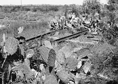 Missouri-Pacific Railway Trestle over Salt Bayou 1410251316bw