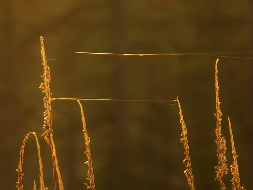 light sunlight golden evening glowing webs